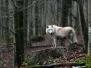 Adler- und Wolfspark Kasselburg